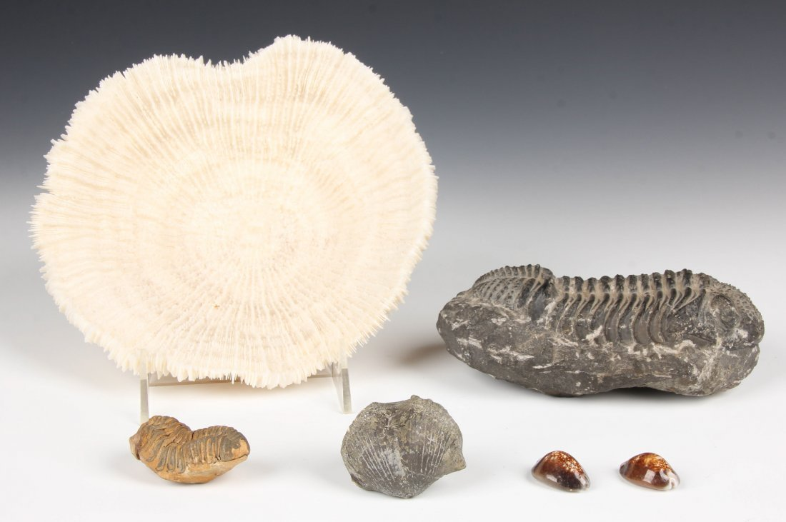 Study Group of Fossils