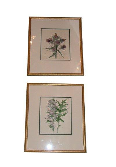 124: Pair of 19th Century Botanicals.  Dimensions:  15.