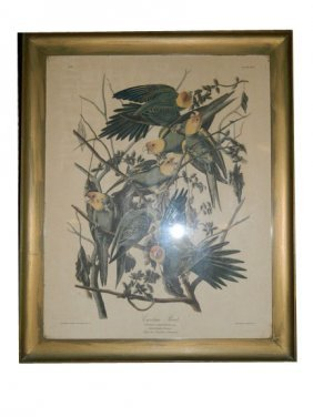 Pair Of 19th C. Framed Bird Botanicals
