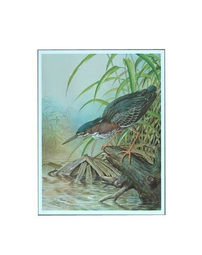 "127: Basil Ede (British, b. 1931) ""Green Heron - Butori"