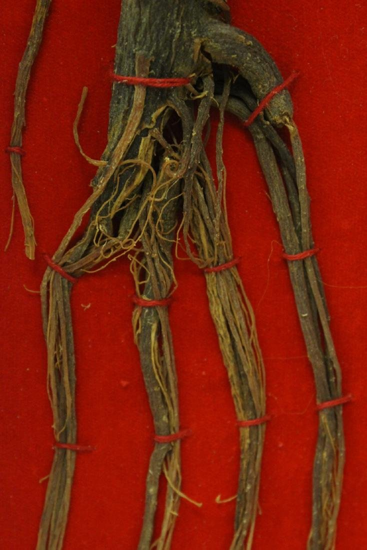Chinese ginseng in box - 7