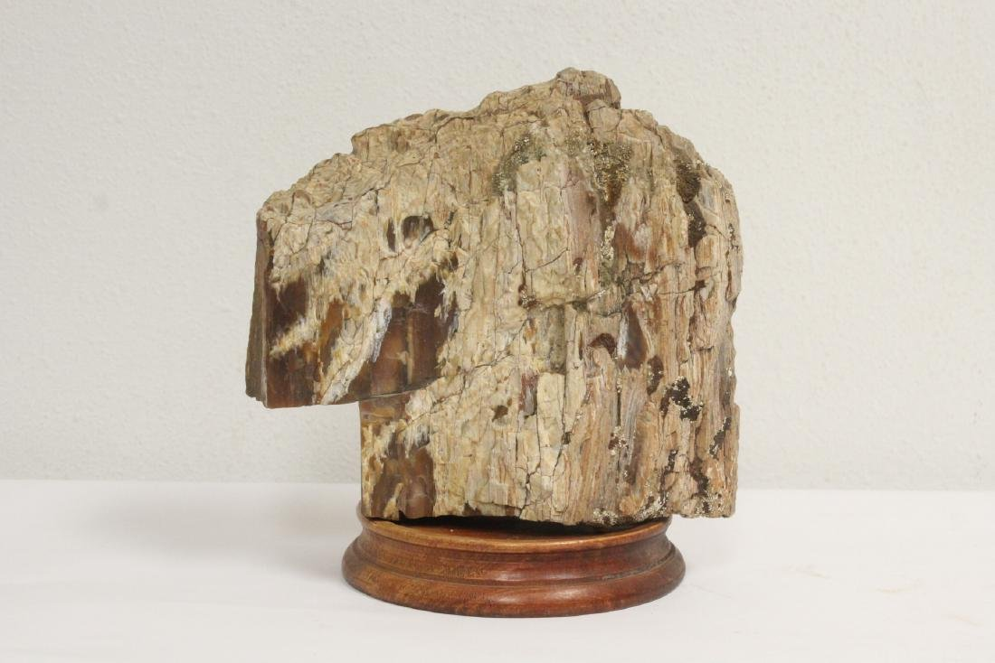 A fossil wood fragment