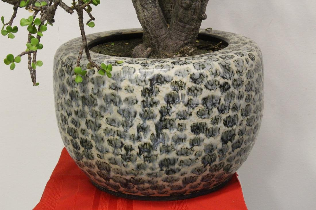 Japanese porcelain planter with plant, signed - 2