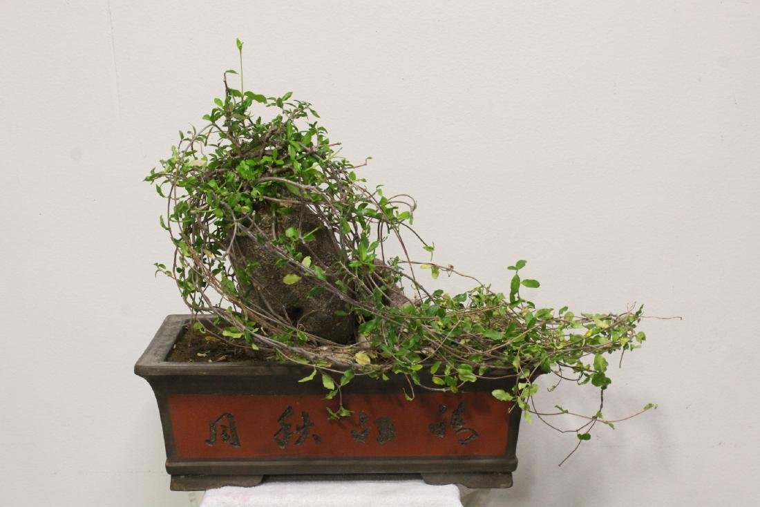 A fine Chinese penzai with Yixing planter - 10