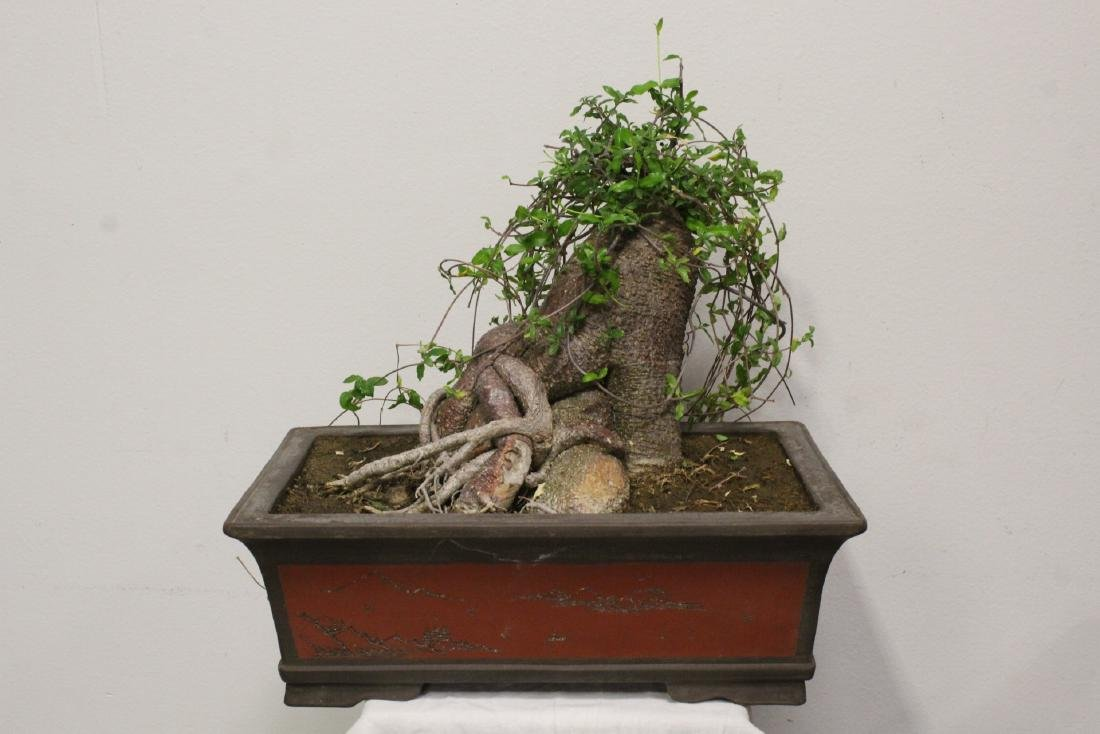 A fine Chinese penzai with Yixing planter