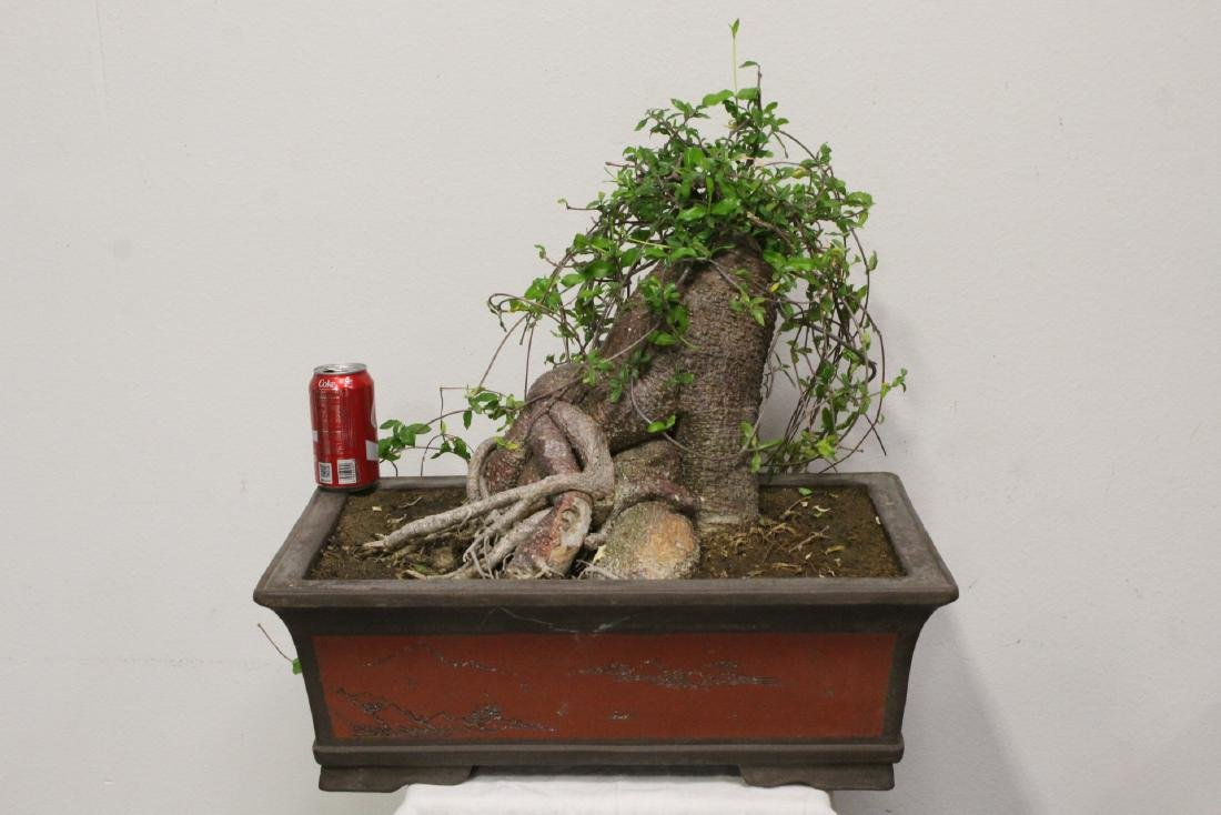 A fine Chinese penzai with Yixing planter - 2