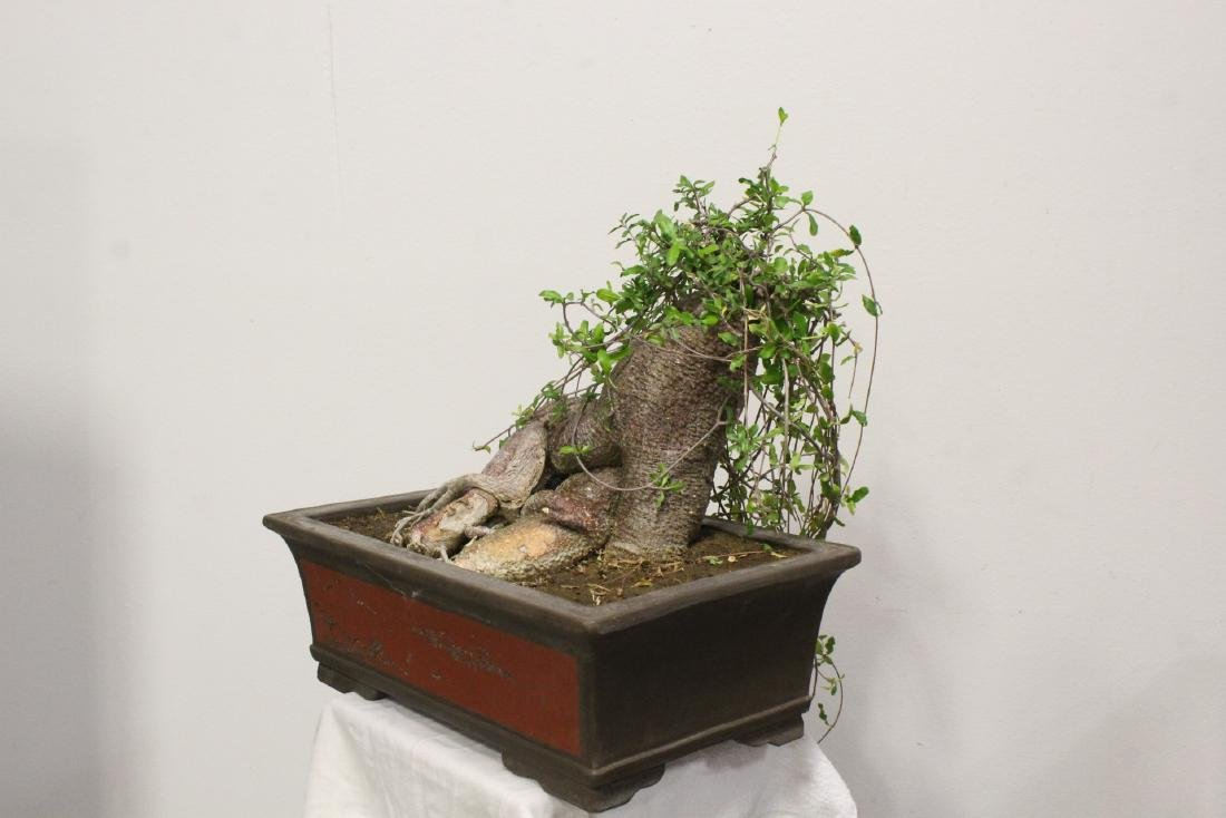 A fine Chinese penzai with Yixing planter - 7