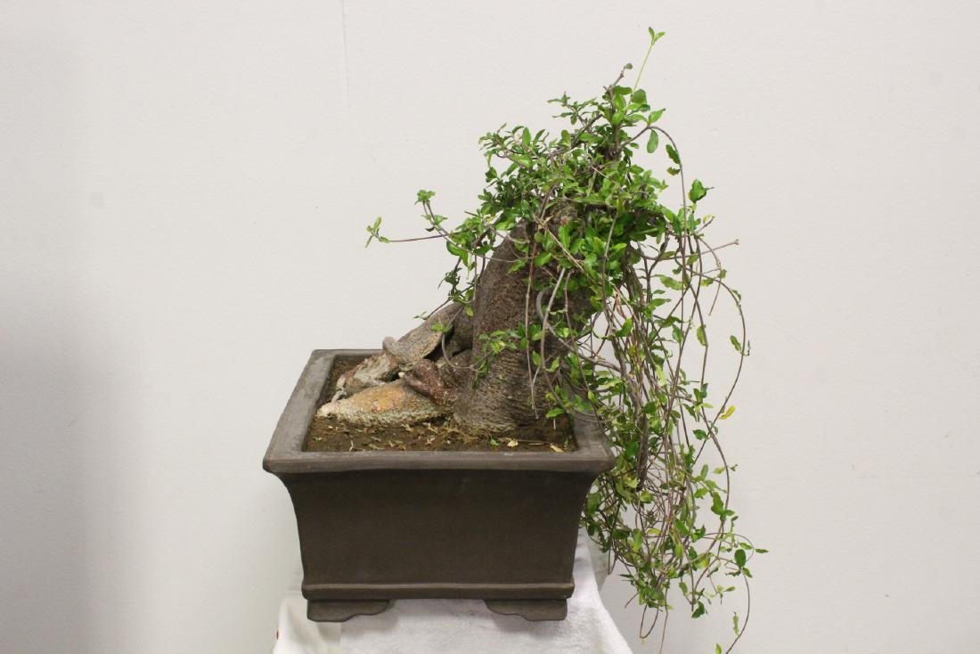 A fine Chinese penzai with Yixing planter - 8