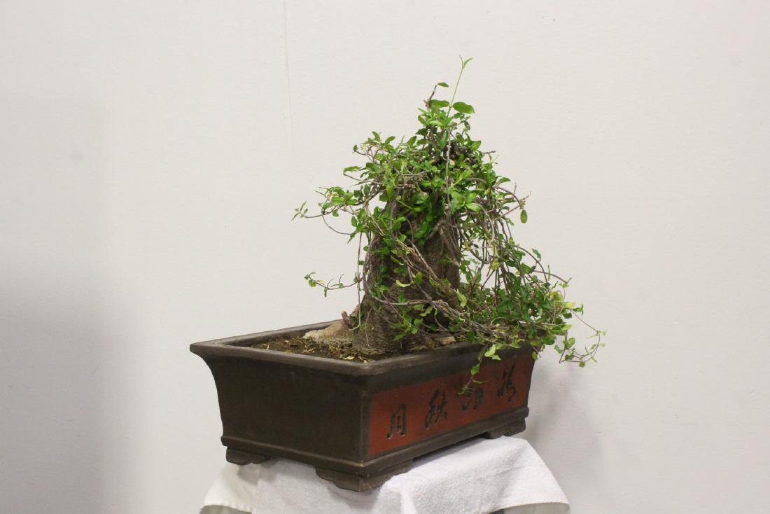 A fine Chinese penzai with Yixing planter - 9