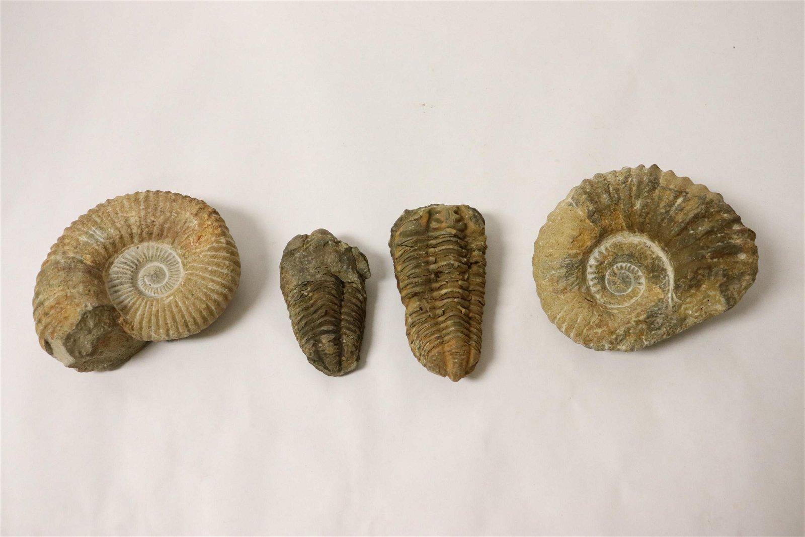 4 fossil stones