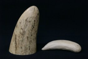 Solid Ivory Tusk Tip & A Possible Walrus Ivory Pc