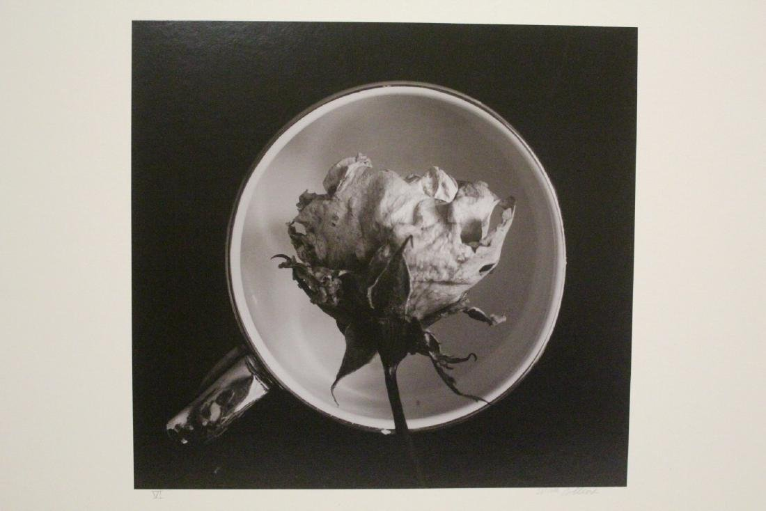 Collection of photographs by Bill Colins - 8