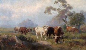 Robert Camm Cattle Grazing