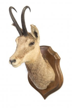 A Taxidermied Deer's Head On Carved Wooden Shield Back