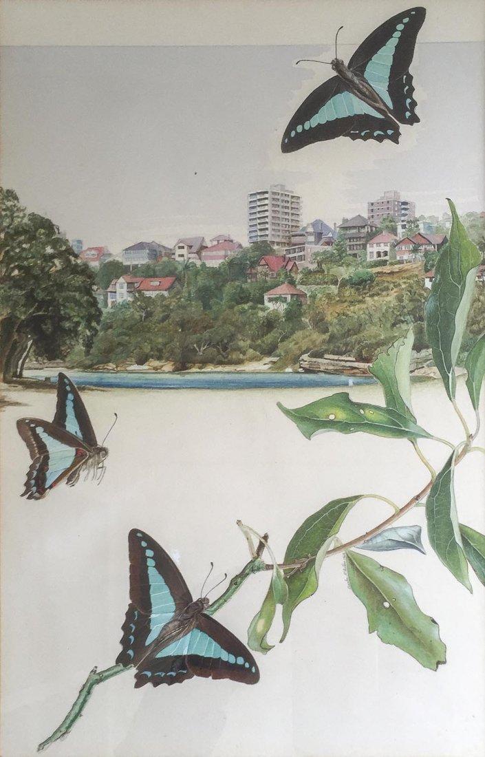 CHARLES McCUBBIN Australian Butterflies 1968