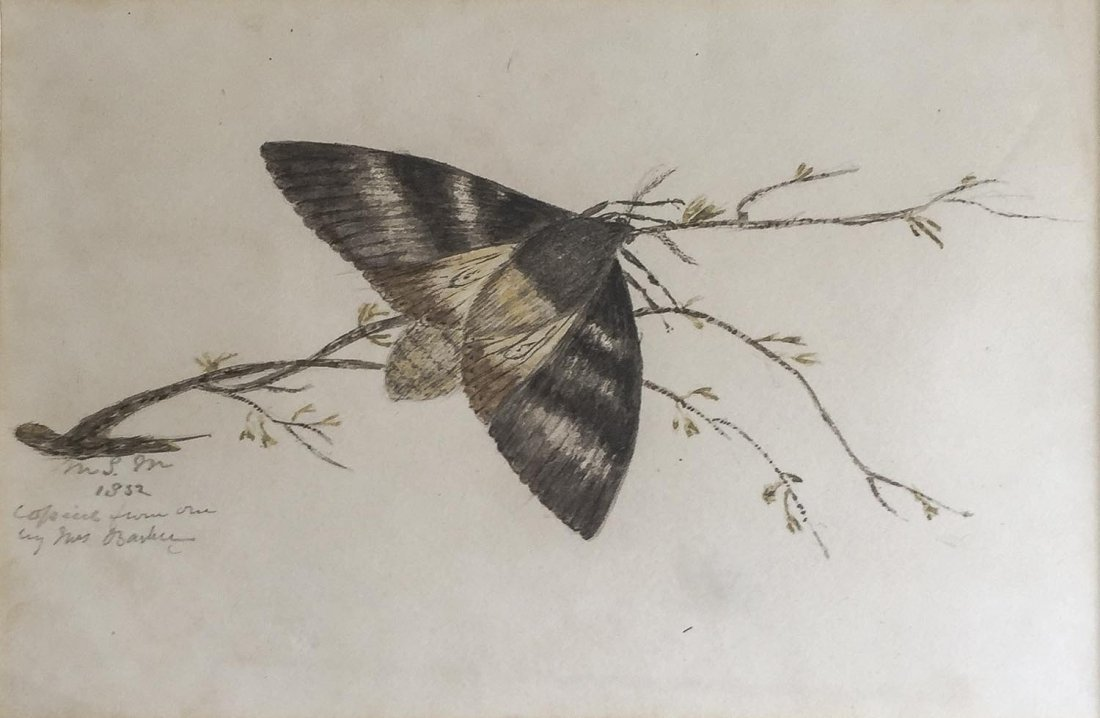 MRS BARKERButterfly 1832watercoloursigned lower left: