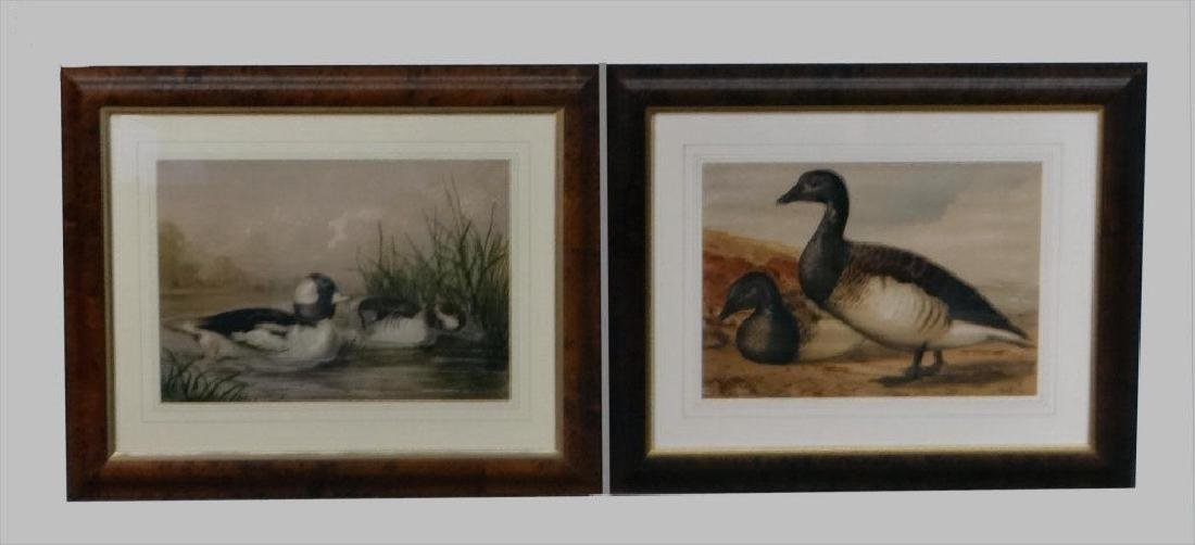 """2 DUCK LITHOGRAPHS AFTER A. POPE JR. 14"""" X 20"""""""