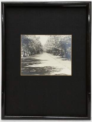 Vintage Black and White Photograph Tree Lined Street