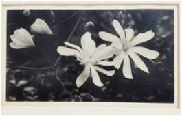 William E. Dassonville Blossoms Photograph