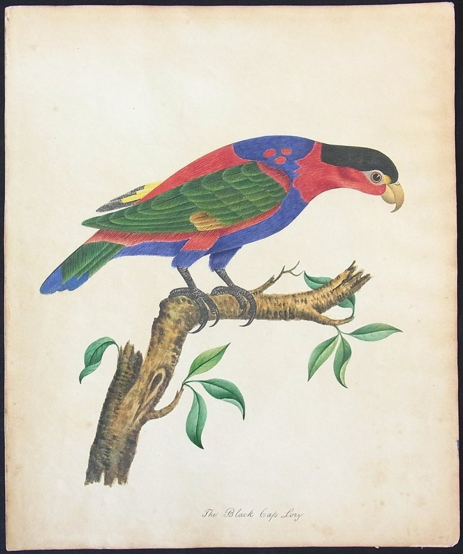 1: Original 19th Century Watercolor Study of a Parrot A