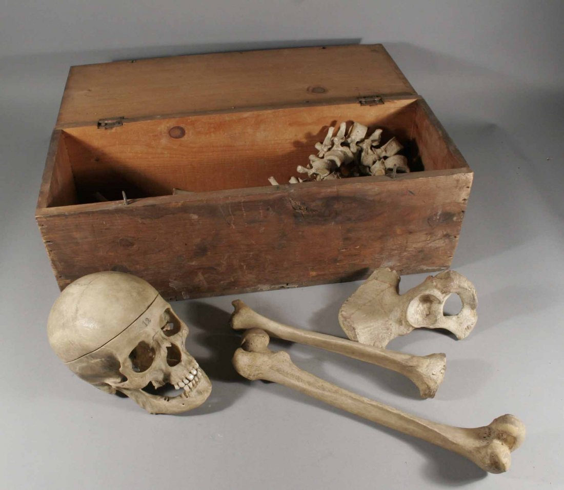 600: A Victorian part Human skeleton in pine box label