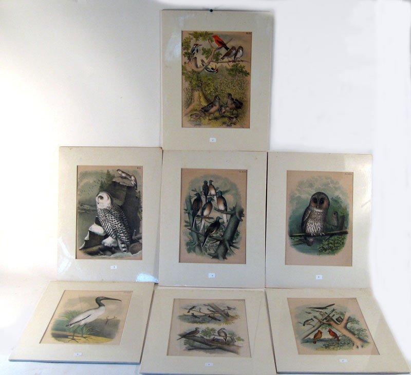 3: Set of 7 19th century avian colored engravings inclu