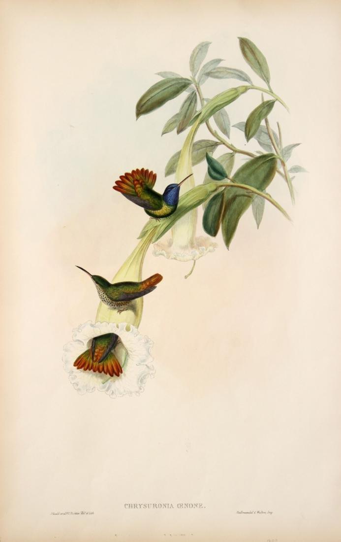 J. Gould - Chrysuronia Oenone
