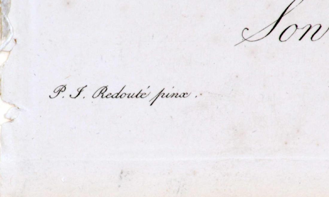 Pierre Joseph Redoute - Sowerbea Juncea - 2