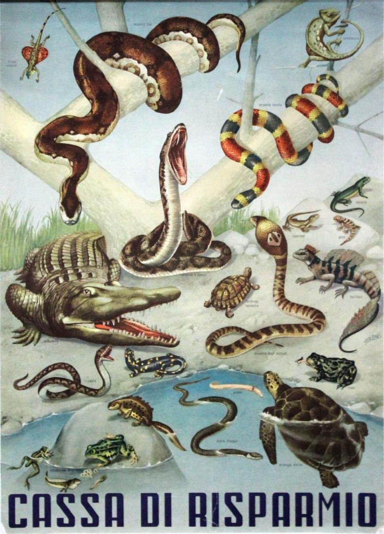 Vintage Poster - Itallian House of Reptiles Ad