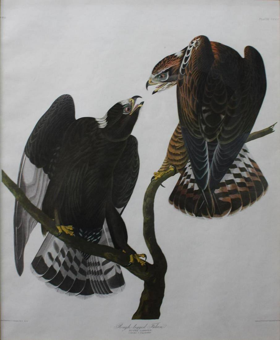 John James Audubon (After) - Rough-Legged Falcon