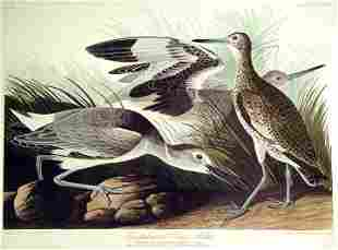 John James Audubon (After) - Semiplmated Snipe or