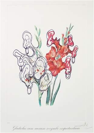 Salvador Dali - Gladiolus Cum Aurium Corymbo