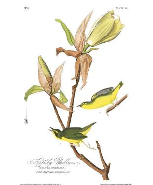 John James Audubon (After) - Kentucky Warbler
