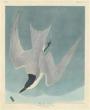 John James Audubon (After) - Marsh Tern
