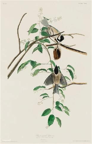 John James Audubon - Carolina Titmouse