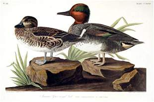 John James Audubon (After) - American Green-winged Teal