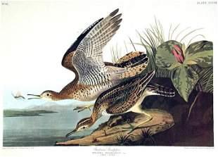 John James Audubon (After) - Bartram Sandpiper