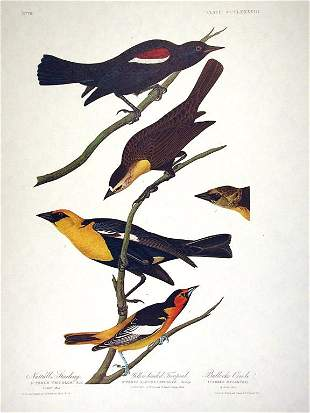 John James Audubon (After) - Yellow-headed Troopial