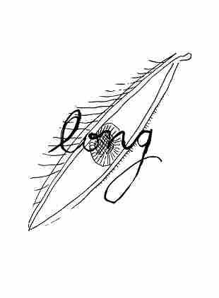 Man Ray - Long