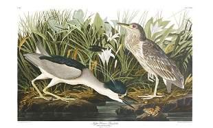 John James Audubon (After) - Night Heron or Qua Bird