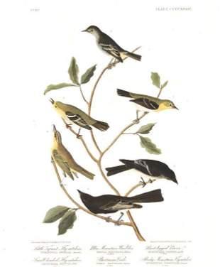 John James Audubon (After) - Little Tyrant Fly-catcher