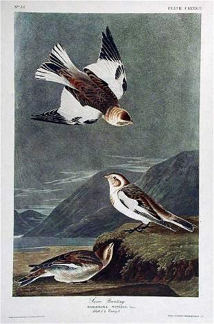 John James Audubon (After) - Snow Bunting
