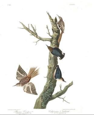 John James Audubon (After) - Brown Creeper