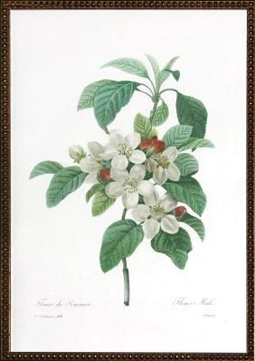Fleurs de la Pommier by Pierre Joseph Redoute