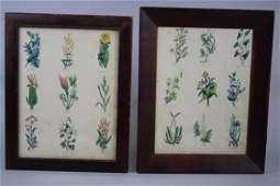 Thomas Kelly Botanical Book Plates Dated 1835