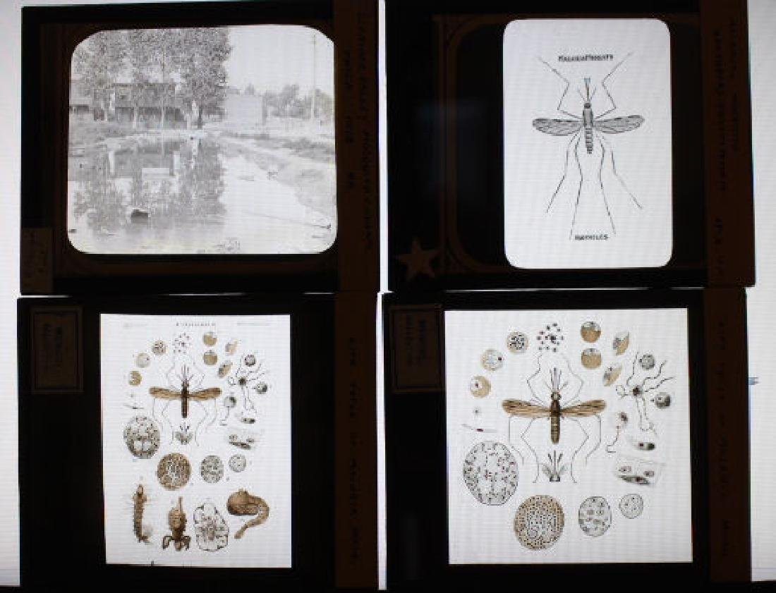 30 Lantern Slides Flies Mosquitos Mengel Collection