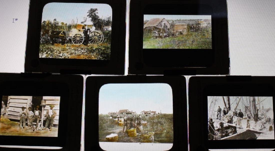 10 Lantern Slides - Cotton Industry