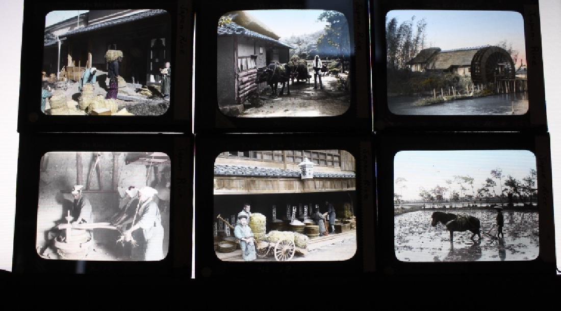 18 Lantern Slides - Japan rice series Takagi