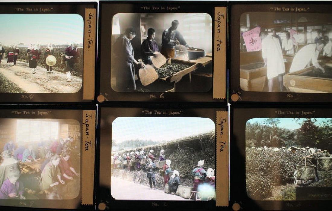 14 Lantern Slides - Tea Industry T. Takagi