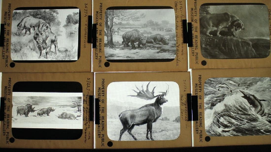 28 Lantern Slides - Pre-historic Animals